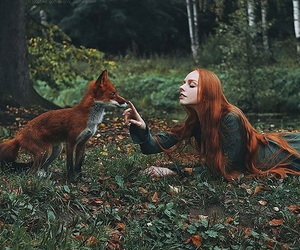 fox, forest, and girl image