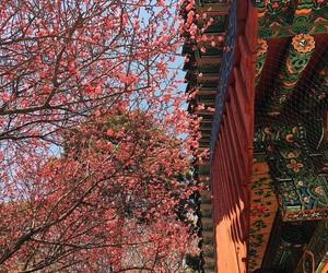 korea, spring, and south korea image