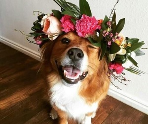 dog, animal, and flowers image