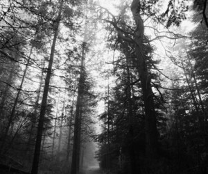Darkness, wood, and road image