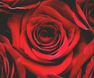 disney, roses, and wallpaper image