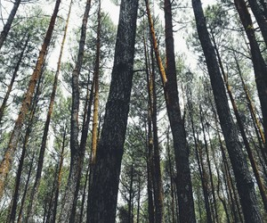 forest, life, and photograph image