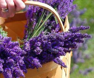 basket, lavanda, and provence image