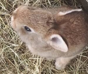 bunny, little, and tiny image