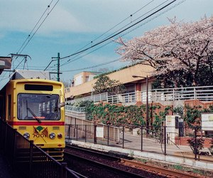 asia, japan, and spring image