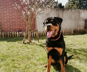beauty, dog, and garden image