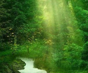 green, forest, and landscape image