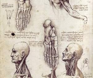 drawing, art, and anatomy image