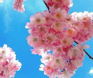 blossoms, hello spring, and flowers image