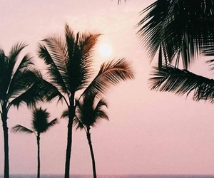 palm trees, pink, and summer image