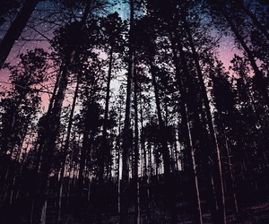 wallpaper, forest, and galaxy image