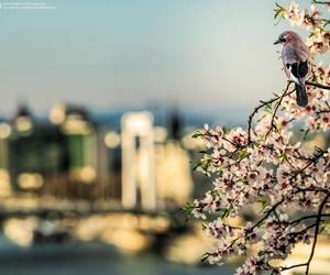 budapest, flowers, and spring image