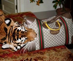 fashion, gucci, and tiger image