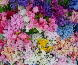 colorful, flowers, and pink image
