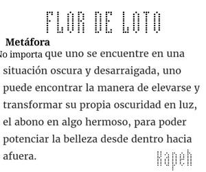 flor de loto image