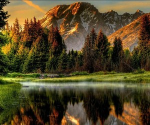 beautiful, forest, and view image