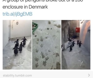 funny, penguin, and zoo image
