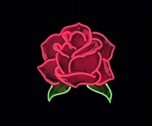 rose, neon, and light image