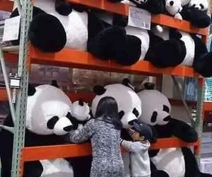 panda, tumblr, and cute image