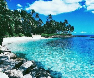 beach, blue water, and palms image