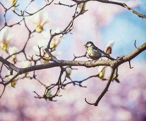 beauty, nature, and bird image