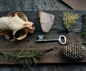 bones, herbs, and key image
