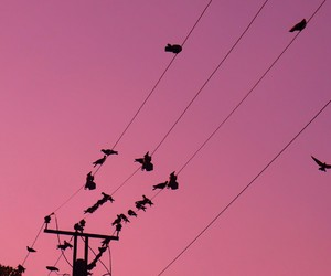 pink, pink sky, and telephone line image