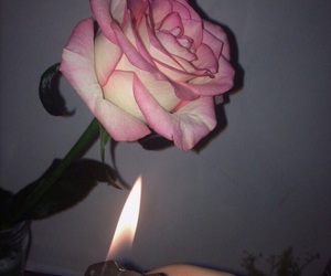 rose, pink, and fire image