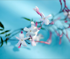 50mm, blue, and flower image