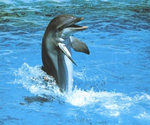 dolphin, joie, and smile image