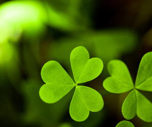 clover, irish, and ireland image