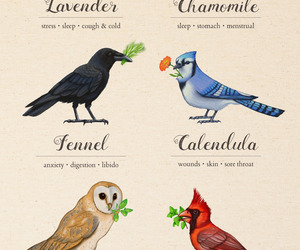 herbs and birds image