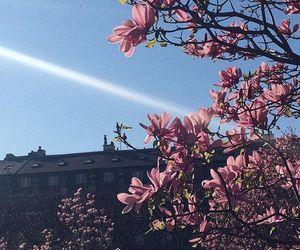 blossom, paris, and flowers image