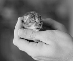 adorable, baby, and black & white image