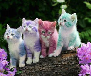 colors, cute, and kitten image