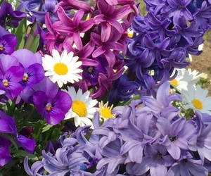 flower, nature, and hyacinth image