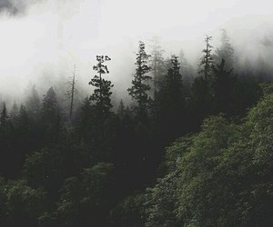 forest, nature, and wallpaper image