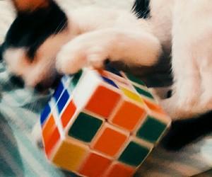 cat, kitten, and rubik image