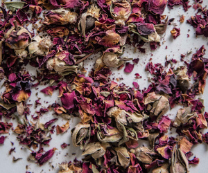flower, rose, and petals image