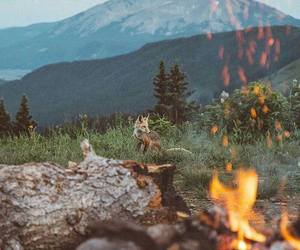nature, mountains, and fox image