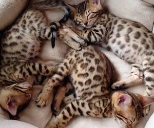 adorable, leopard, and animal image