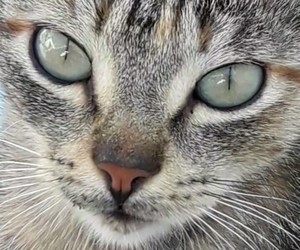 cats green eyes image