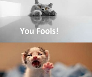 cat, funny, and gandalf image