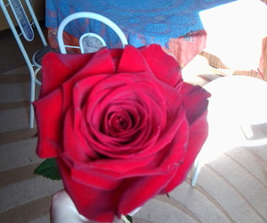 beautiful, gift, and rose image