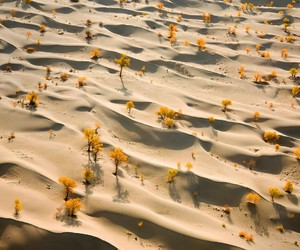 desert, flowers, and sand image