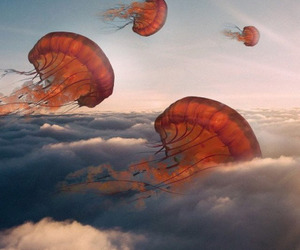 sky, jellyfish, and clouds image