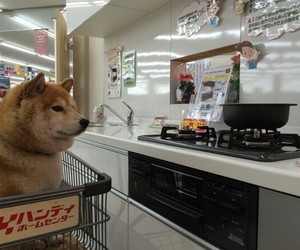 dog, japan, and shiba inu image