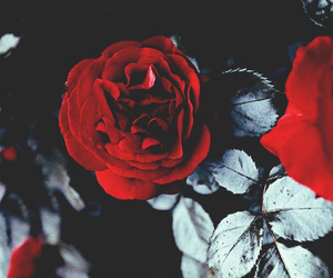 💖 and 🌹 image