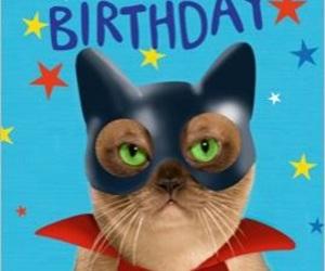 birthday, cat, and happy image