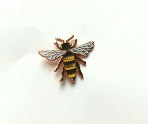 bee and insect image